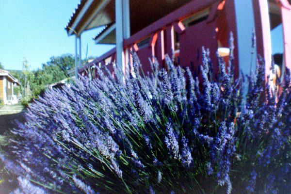 Lavendel - Domaine de Sevenier