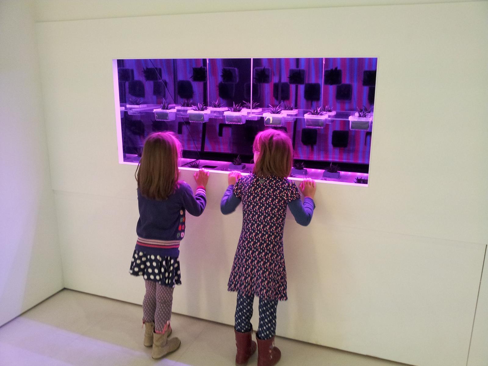 LED groei lampen kas - Philips Museum
