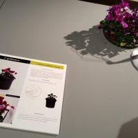 The Plant Sex Consultancy – Expositie Baltan