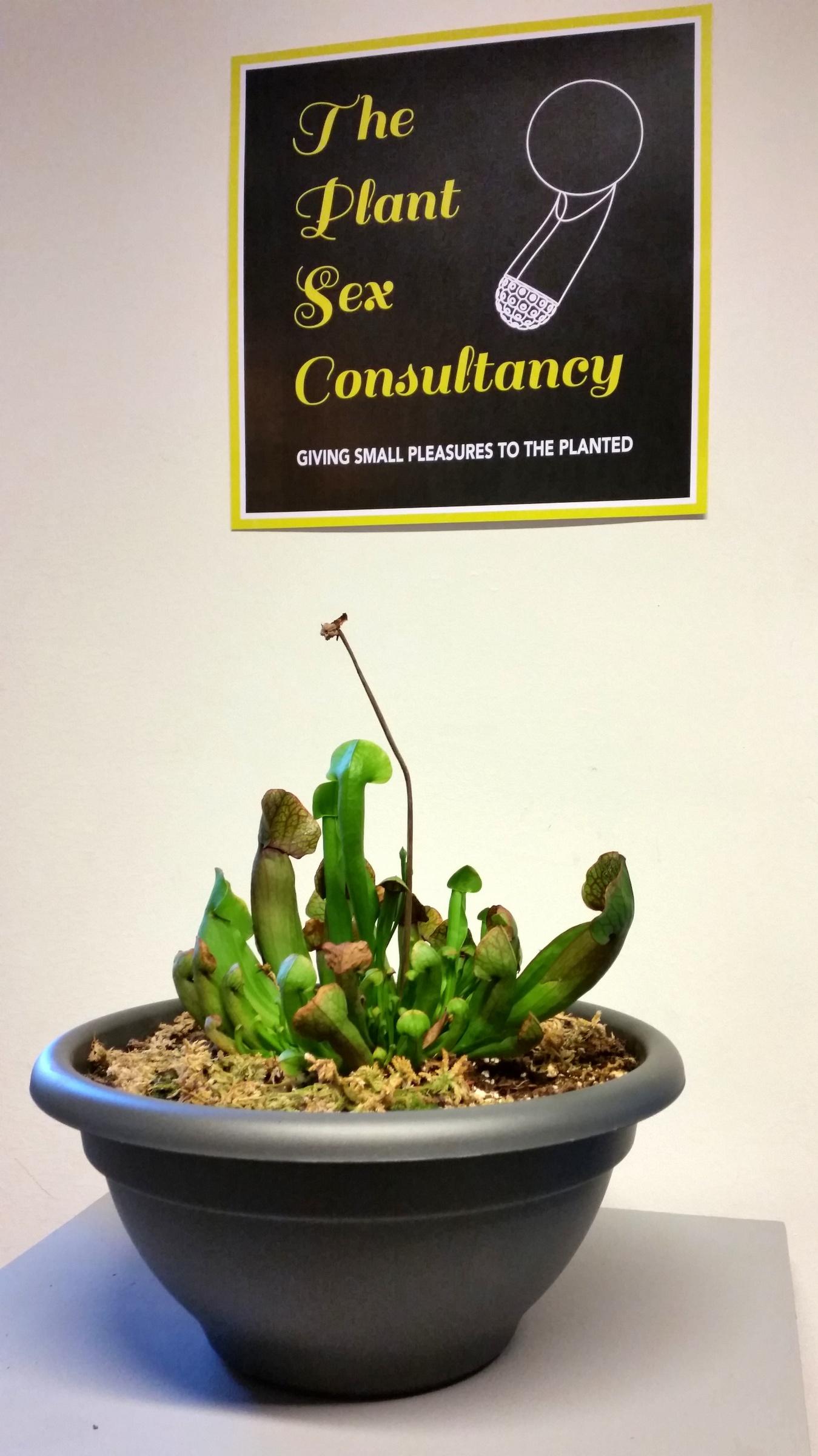Plant Sex Consultancy