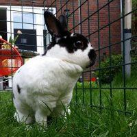 James & Mieke: onze twee geadopteerde konijnen